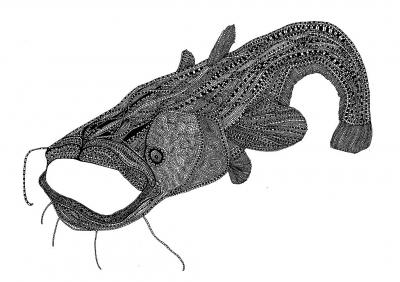 Natalia Klęczar, Fish Illustration cycle 3, digital printing